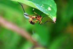 Wespe sticht, die schönen Wespen unter den grünen Blättern Lizenzfreie Stockfotografie