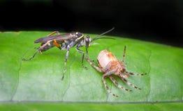 Wespe und tote Spinne Lizenzfreie Stockbilder