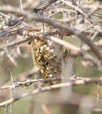 Wespen in der Natur Makro Lizenzfreie Stockfotografie