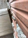 Wespen die van de koude verbergen Royalty-vrije Stock Afbeelding