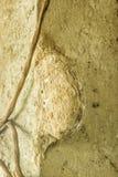 Wespen im Nest auf der Spalte Stockfotos