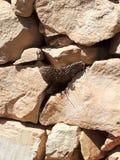 Wespen-Nest stockbilder