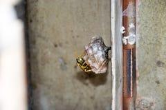 Wespen-Nest stockfotografie