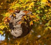 Wespen-Nest unter Autumn Leaves Lizenzfreie Stockbilder