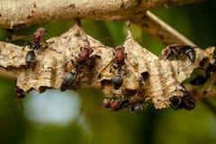 Wespen op het nest stock fotografie