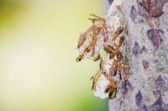 Wespenbienenstock Lizenzfreie Stockbilder