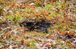 Wespenvlieg in hun nestmink met een espnest ondergronds stock fotografie