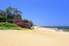 West amoy island sandy beach with purple bougainvillea and trees Royalty Free Stock Photos