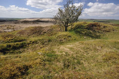 West Ansty Barrows Stock Photography