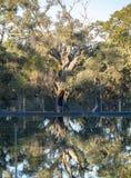 West Australian alinhou a represa imagens de stock