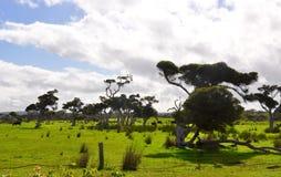 West-Australien-Ackerland-Landschaft Stockbilder