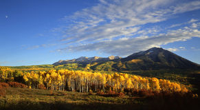 West Beckwith Mountain. A grove of aspen trees in front of West Beckwith Mountain royalty free stock photos