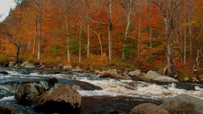 West Branch Ausable River in the Adirondack Mountains High Peaks Region. Vibrant red, yellows, and oranges of the fall foliage in Upstate New York stock video