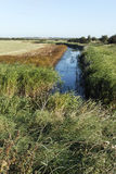 West Canvey Marsh RSPB Reserve, Stock Photo