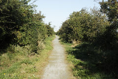 West Canvey Marsh RSPB Reserve, Stock Photography