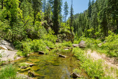West Clear creek Arizona in spring. The amazing hidden gem of west clear creek in Arizona stock photo