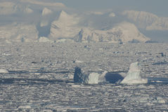 West coast of the Antarctic Peninsula in the winter ice and iceb Royalty Free Stock Photography
