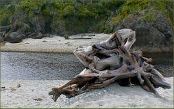 West Coast beaches of New Zealand (27) stock photos
