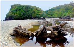 West Coast beaches of New Zealand (31) stock images