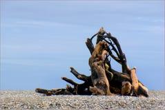 West Coast beaches of New Zealand (32) royalty free stock image