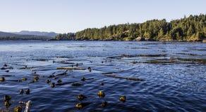 West Coast Ocean Scene with Kelp Stock Image