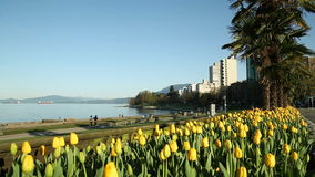 West End, English Bay, Vancouver. Dolly shot past tulip blossoms at English Bay beach on a sunny, spring day. Vancouver, British Columbia, Canada stock video footage