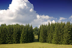 West European forest. Classical landscape Stock Photo