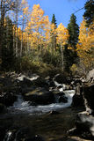 West fork clear creek gunshot rapid in fall. Looking up a creek in Colorado in the fall Stock Photography