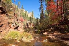 West Fork Oak Creek. Autumn in West Fork Oak Creek, near Sedona Royalty Free Stock Image