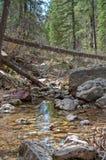 West Fork of Oak Creek royalty free stock images