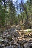 West Fork of Oak Creek royalty free stock image