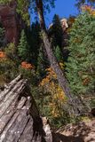 West Fork of Oak Creek Canyon No. 108 Royalty Free Stock Photography