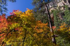 West Fork of Oak Creek Canyon No. 108 Royalty Free Stock Images