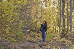 West Fork Trail in Fall Royalty Free Stock Image