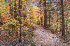West Fork Trail in Fall Stock Photo
