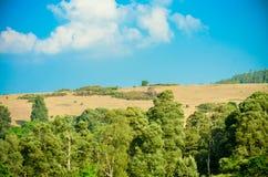 West-Ghat lizenzfreies stockfoto