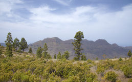 West of Gran Canaria, April Royalty Free Stock Photo