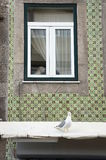West highland terrier and seagull Stock Image