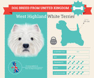 West Highland White Terrier dog breed  infographics Royalty Free Stock Photos