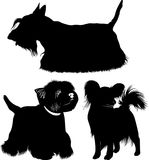 West Highland White Terrier. Dogs. papillon dog. Scotch Terrier. Royalty Free Stock Images