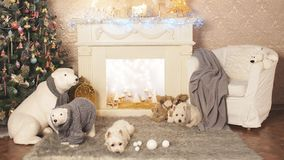 West highland white terrier dogs waiting for Christmas stock footage