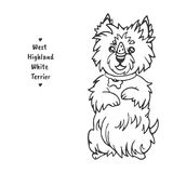 West Highland White Terrier sits on its hind legs and holds a piece of goodies on its nose stock images