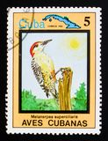 West Indian Woodpecker Melanerpes superciliaris, Endemic birds, Cuban circa 1983. MOSCOW, RUSSIA - AUGUST 29, 2017: A stamp printed in Cuba shows West Indian royalty free stock photo