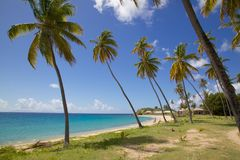 West Indies, Caribbean, Antigua, Palm Trees and Beach Royalty Free Stock Image