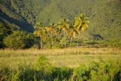 West Indies, Caribbean, Antigua, South Coast, Inland near Turner's Beach Royalty Free Stock Image