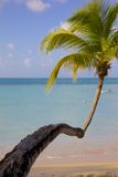 West Indies, Caribbean, Antigua, St Georges, Blue Water Beach Royalty Free Stock Photography