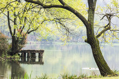 West internal lake and peach blossom Royalty Free Stock Image