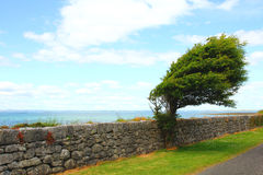 West ireland wind shaped tree Royalty Free Stock Photo