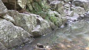 Granite, water, grass, tree root. stock footage