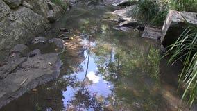 West-Ithaca-Nebenfluss, Brisbane Australien stock footage